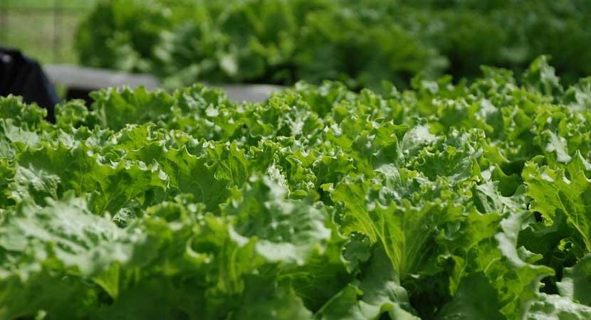 Horticulture - Nurseries