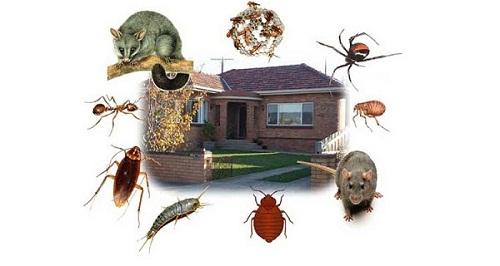 Top 10 Pest Control Services in Jaipur