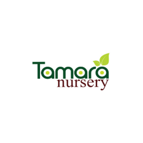 Tamara Nursery